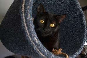 Model:KittenBuddy